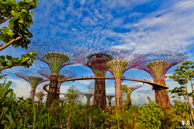 Сингапур Gardens by the Bay Supertrees